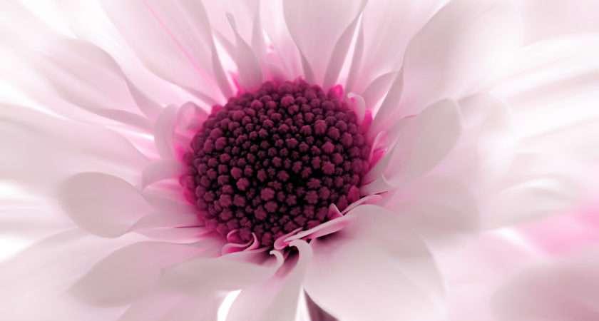 Pink Flower Designs High Quality