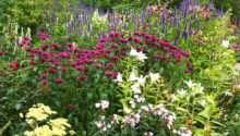 Plant Herbaceous Perennial Border David Domoney