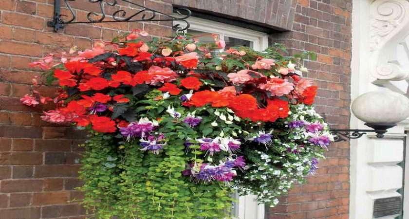 Plants Hanging Basket Ideas Interesting