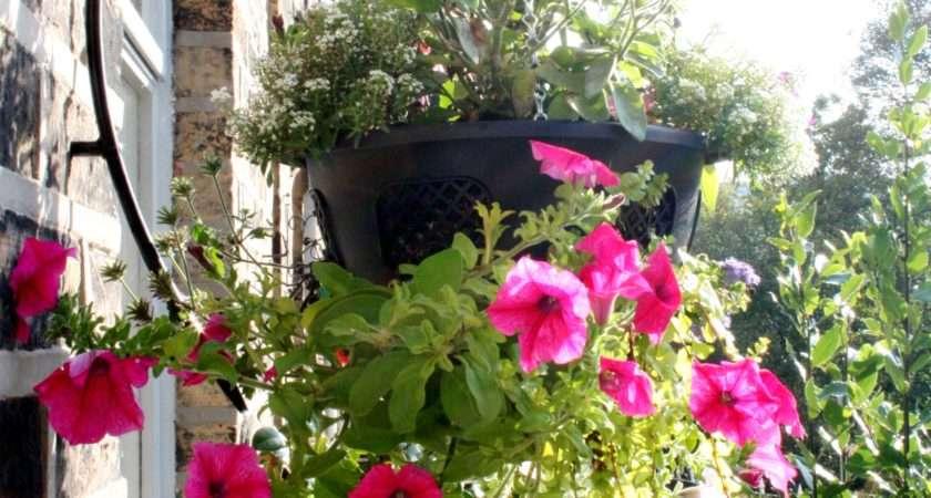 Plants Put Hanging Baskets Garden Features Ideas