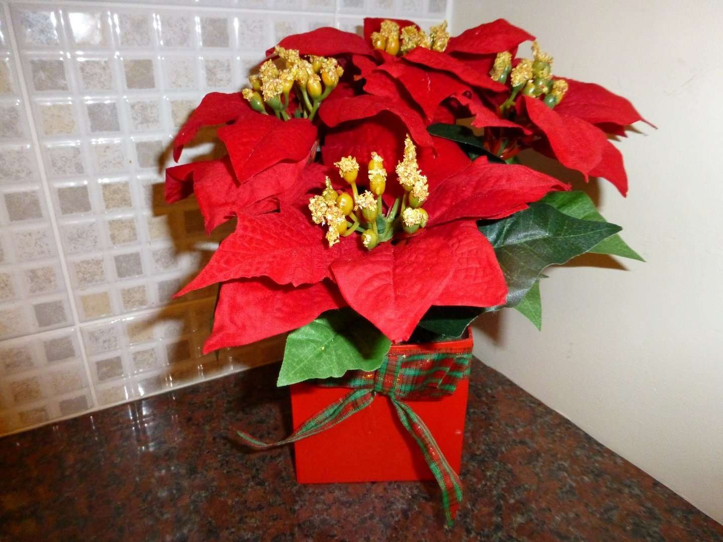 Plants Red Poinsettia Christmas Plant Pot Indoor