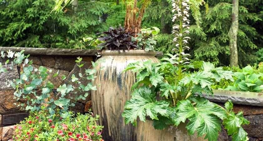 Plants Your Patio Hgtv