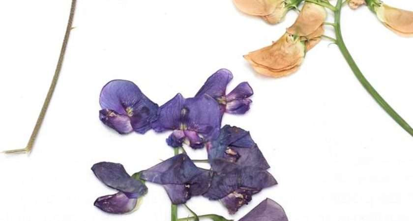 Press Flowers Perfectly Dried Petals Homesteading