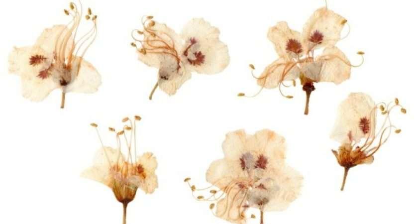 Press Flowers Thriftyfun