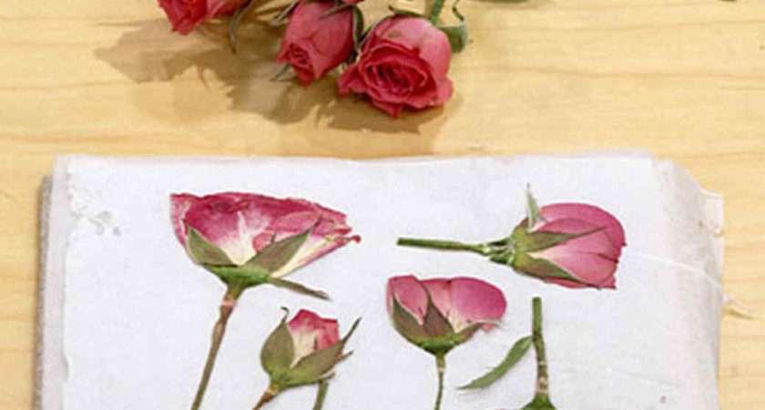 Pressing Flowers Janie Martha Stewart