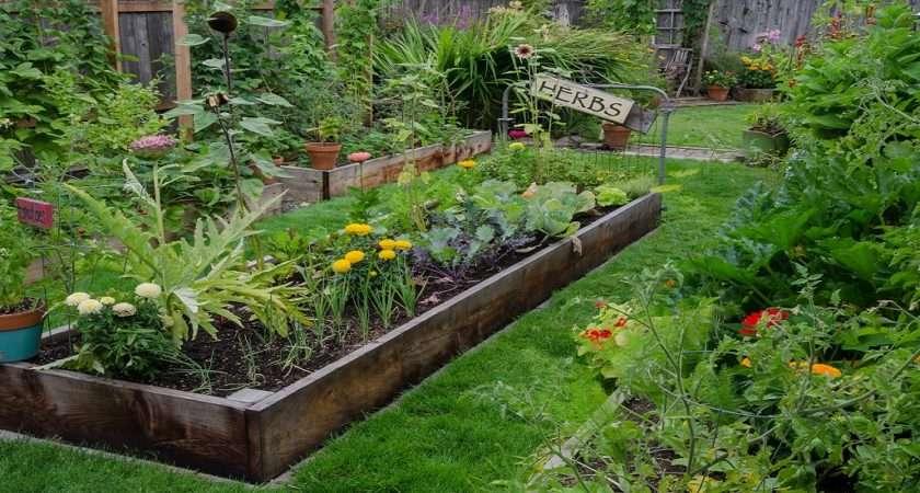 Raised Garden Beds Better Backyard Crops