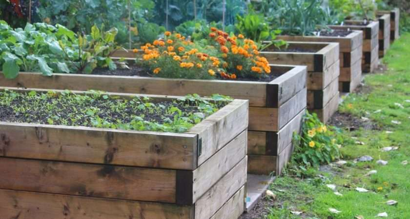 Reasons Why Raised Beds Best Way Garden