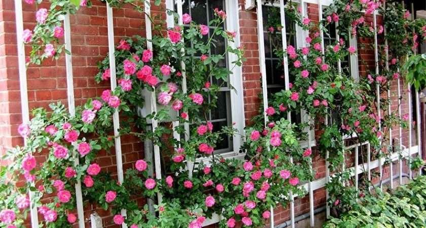 Rose Trellis Not Secret Garden Pinterest