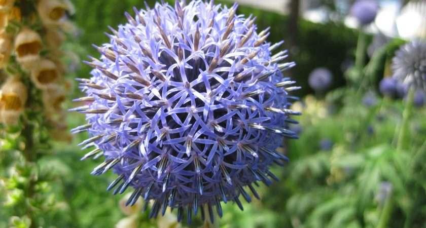 Rotary Botanical Gardens Hort Blog Savor Spheres Garden