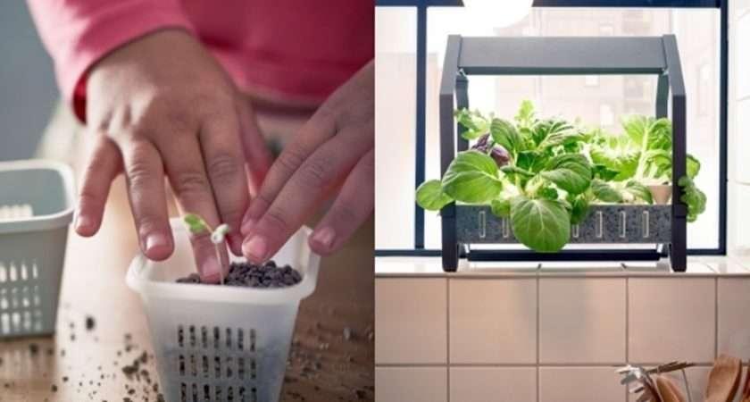 Same Process Home Hydroponics Ikea Indoor Garden