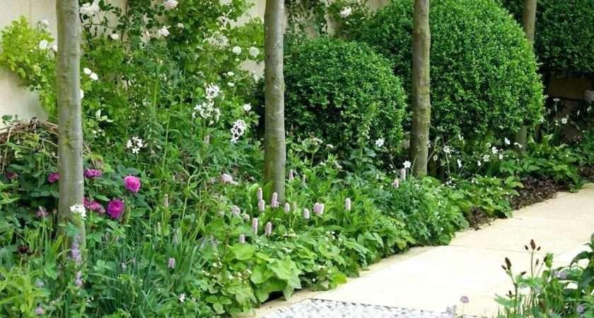 Small Garden Plants Talentneeds