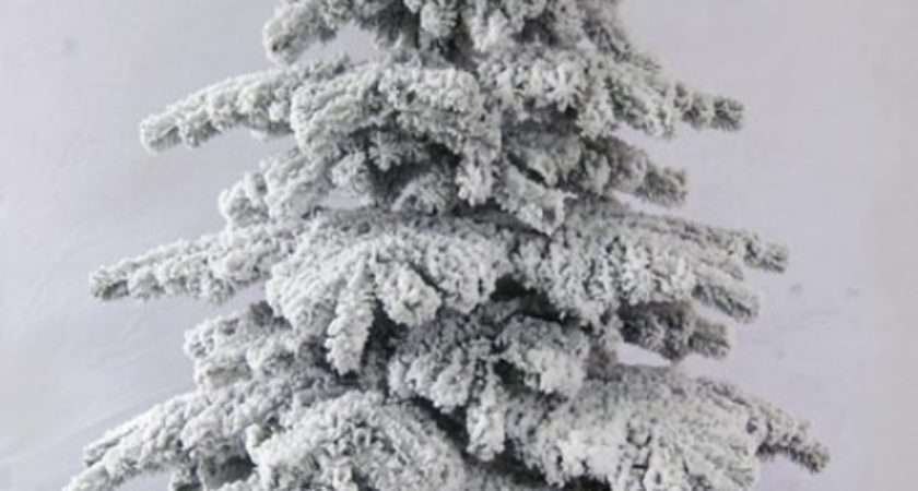 Snow White Fir