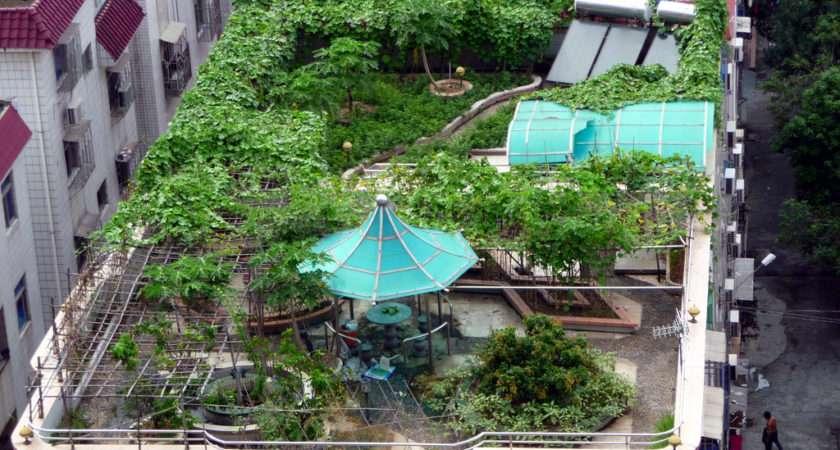 Start Rooftop Garden