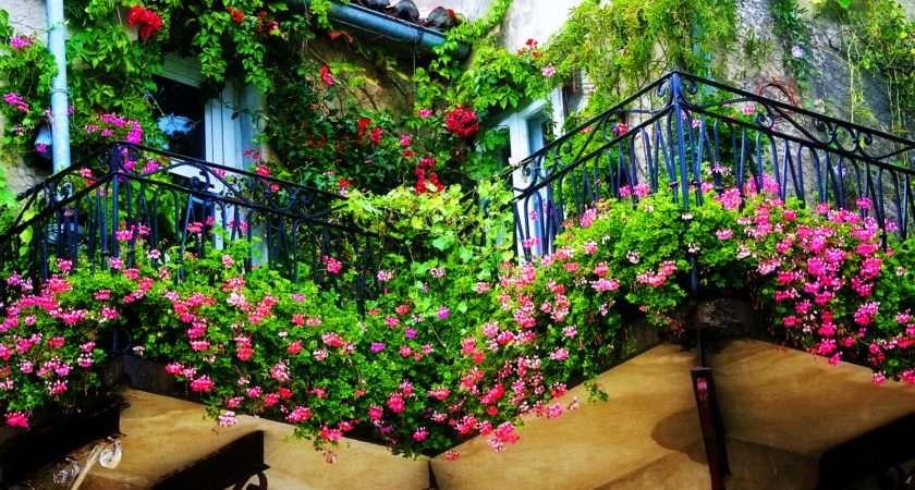 Starting Balcony Garden Harlem Any Ideas