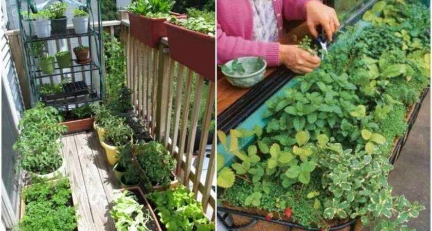 Tips Starting Apartment Garden Realfarmacy