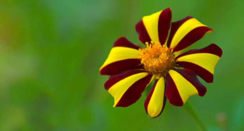 Top Flowers Hdimagesplus