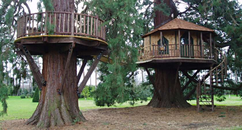 Treehouses Taking Cool Whole New