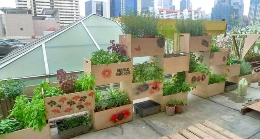 Urban Rooftop Farms Singapore Food Agriculture Pinterest