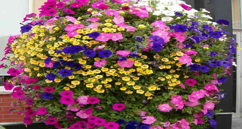 Various Design Hanging Basket Flowers Bloom