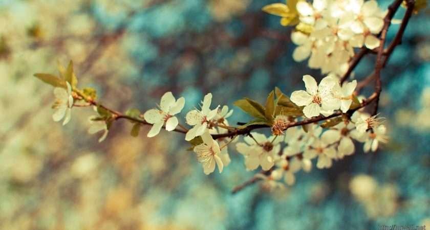 Vintage Vector Floral Flowers Tone High