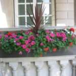 Window Box Red Star Summer Flowering