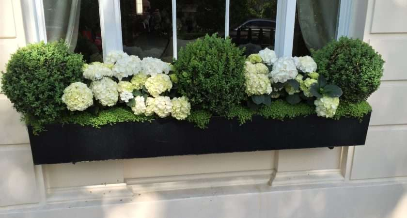 Window Boxes Knightsbridge London