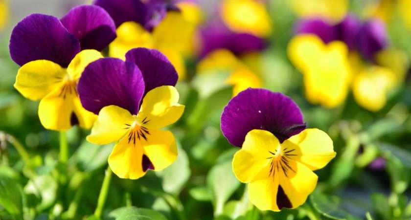 Winter Coming Best Flowers Lawnstarter