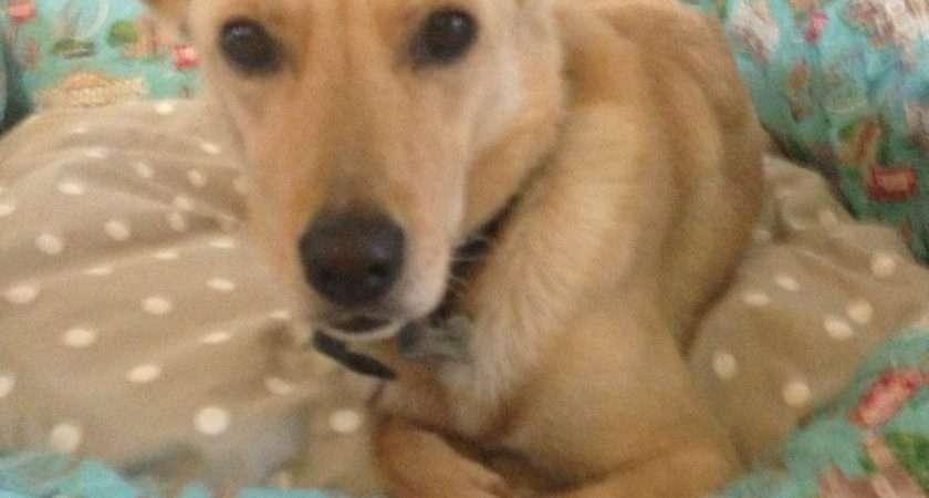 Yoda Brilliant New Cath Kidston Dog Bed Mum Blog